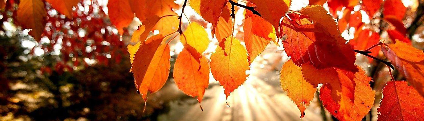 The Autumn leaves of red and gold bring a special beauty to a changing season